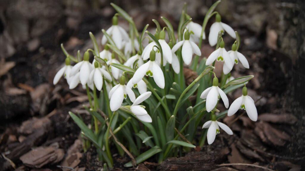 Zdjęcie wiosennych kwiatów