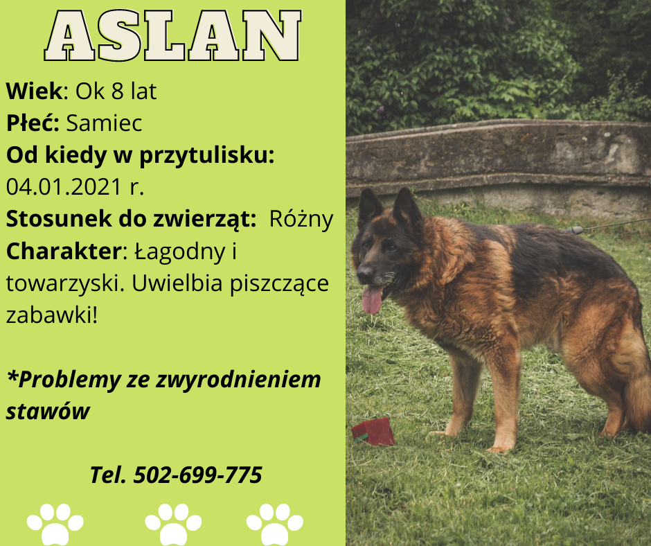 grafika psa do adopcji - Aslan