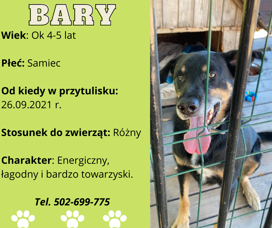 grafika psa do adopcji- Bary