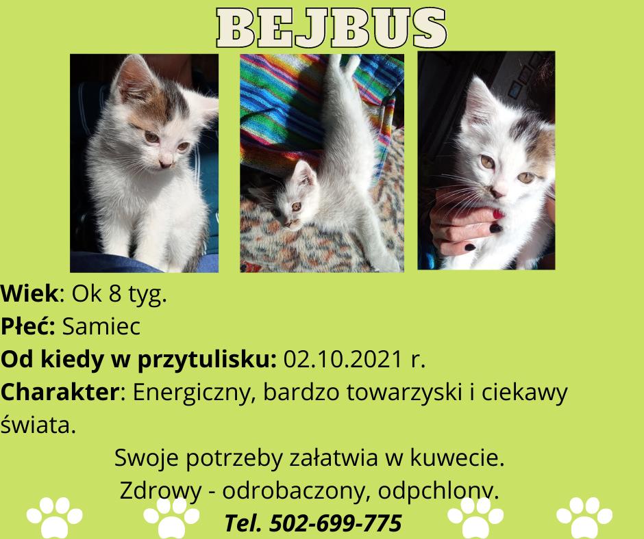 grafika koty do adopcji- Bejbus
