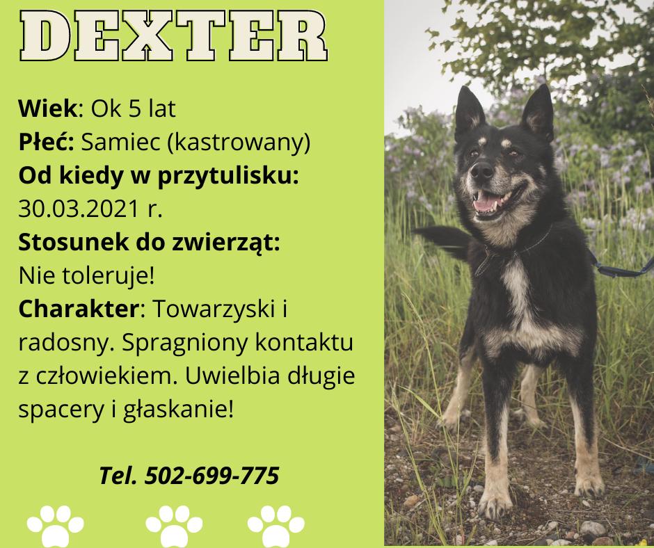 grafika psa do adopcji Dexter
