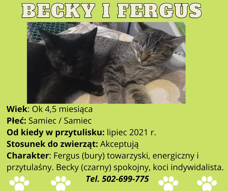 grafika koty do adopcji Becky i Fergus